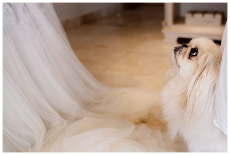 Tsala Wedding with the bride's dog looking up to the bride in her wedding dress