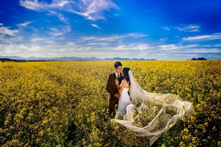 a bridal couple in a field of yellow flowers and blue sky