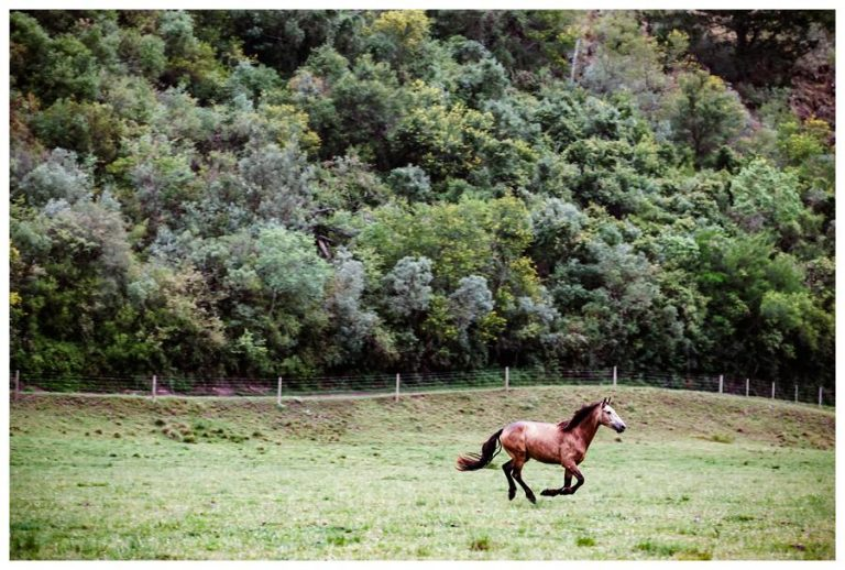a horse running at this wedding venue in Swellendam