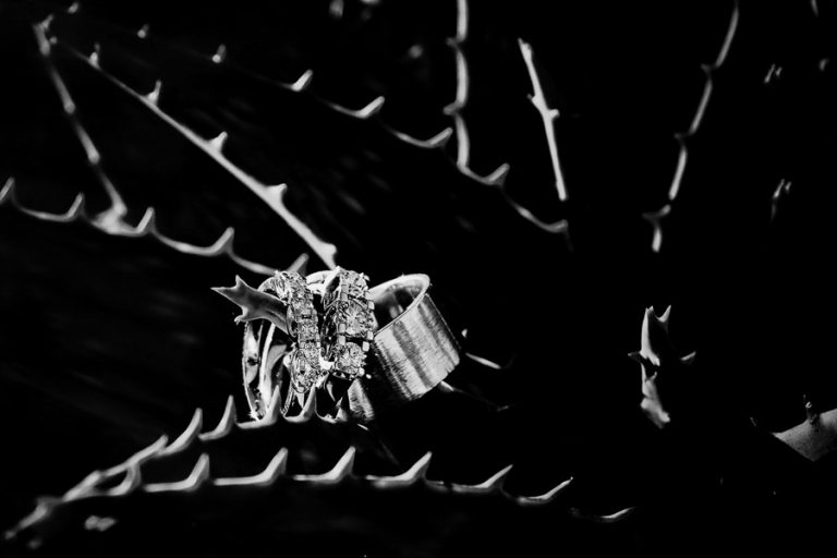 A jewelry designer couple's rings set taken in black and white making use of the semi desert Karoo plant, the Aloe