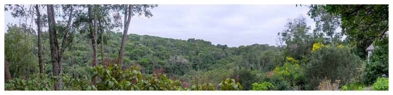a panoramic view of the knysna forest and the wedding chapel towards the right of the image
