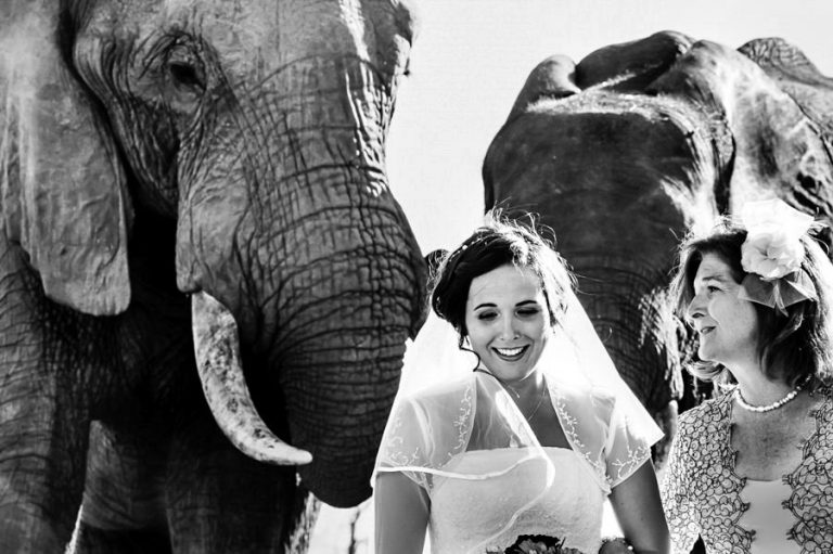 the bride and her mother walks down the isle with a herd of elephants